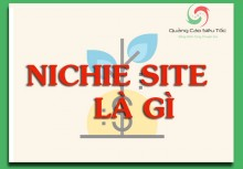 Niche Site là gì ? Cách tìm Niche Site SEO chất lượng nhất 2018
