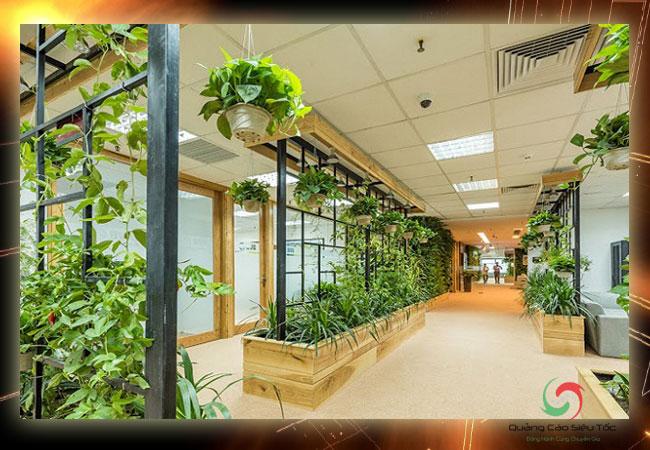 Kinh doanh gì ở nông thôn? Dịch vụ trang trí cây xanh văn phòng